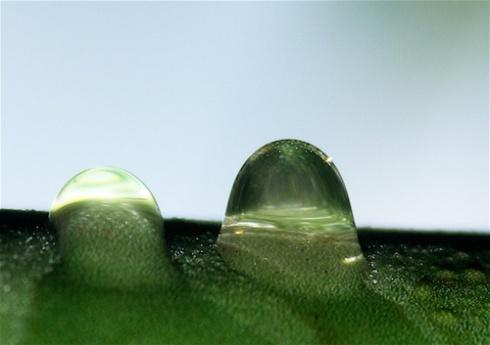 Plumeria Droplets