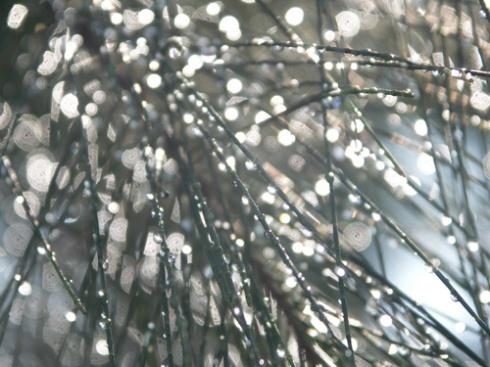 Ironwood Droplets